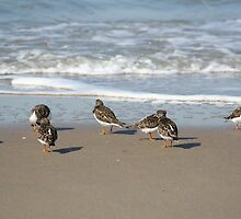 Bird's meeting at the beach by heysje