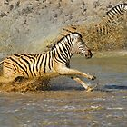 Zebra at Waterhole by Peter Bland