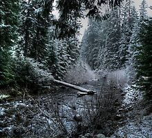 A Winters Dream by Charles & Patricia   Harkins ~ Picture Oregon