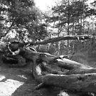 Fallen Giant by CinB