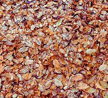 Autumn leaves by numgallery