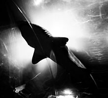Shark Silhouette by AWilsonPhoto