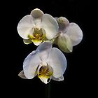 White Orchid by Michael Jordan