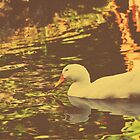 White Duck v.2 by tropicalsamuelv