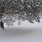 Snowed in pine tree. by Saulite2