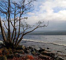 Loch Ness, Scotland by Julie M Gibson
