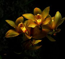 Yellow Orchid Bunch by Dennis Rubin IPA