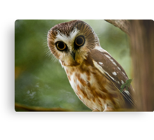 Northern Saw Whet Owl On Branch Metal Print
