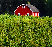 """""""Red Barn"""" by David Lee Thompson"""