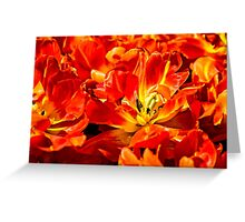 Red Tulips Macro Greeting Card