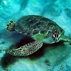 Friendly Sea Turtle by Kasia-D