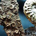 Fossilized Seashells by trueblvr