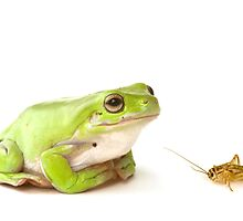 Frog and cricket  by David Gallaher