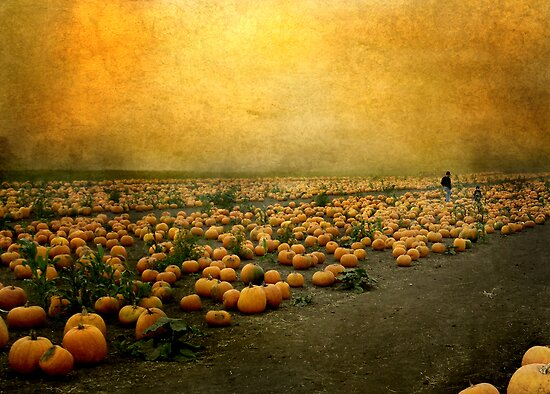Pumkins by Anette Tyler