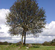Tree on the pastureland by Kady