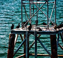 Birds in Boston Harbor by alissawilkinson
