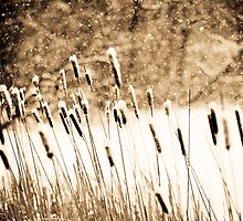 Winter Reeds by Andi Knapp