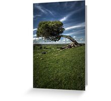 Windswept Greeting Card