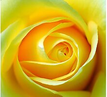 Rose :-   Joy and deep friendship  Photographic Print