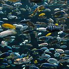 Fishy Diversity by Daphne Johnson