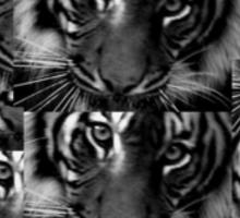 Tiger tiger tiger Sticker