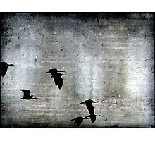 Fly by Night Photographic Print