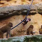 Monkey Tricks by lezvee