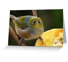 Come A Little Bit Closer!!! - Close Up - Silver-Eye - NZ Greeting Card