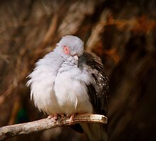 I'ts Snooze Time - Diamond Dove - NZ by AndreaEL
