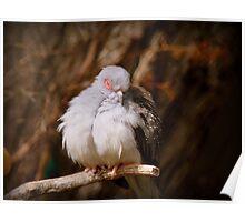 I'ts Snooze Time - Diamond Dove - NZ Poster