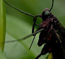 Purple Pollen by Luke Haggis