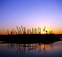 Wetlands Evening by Rebecca Cruz