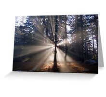 Sunrise in the woods Greeting Card