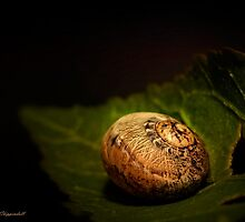 Sleeping snail 01 by kevin chippindall