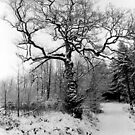 The Tree in Winter  by Carl Gaynor