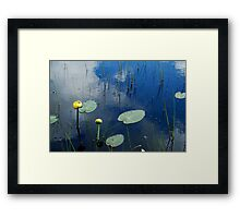 Lily Pads in Pond Framed Print