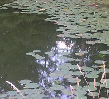 Lily Pads by Walker Everette