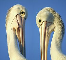 Beak to beak by Cathy Middleton