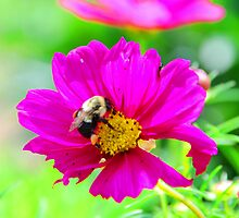 bumble bee.  by Graepear