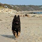 Fun at Manomet Beach  by Bine
