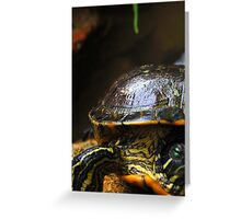 Shell and skin Greeting Card