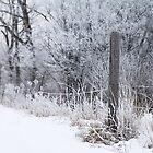Winter Wonderland by AbigailJoy