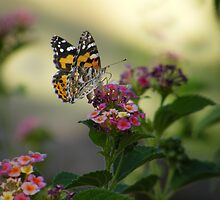 Painted Lady by binjy