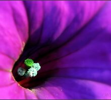 Petunia in purple... by Mary Trebilco