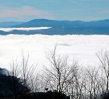 Cotton Wool Morning, Great Alpine Road, Victoria Australia by Philip Johnson
