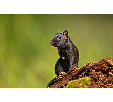 Black Eastern Chipmunk - Ottawa, Ontario Photographic Print