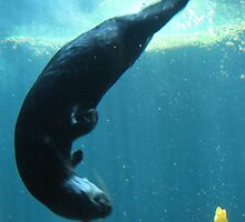 Otter Swirl by Lauren McGregor