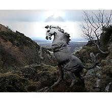 A Wild Stallion Photographic Print