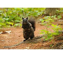 Black Squirrel - Mud Lake Photographic Print