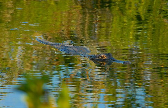 """Cruising the Glades"" by David Lee Thompson"